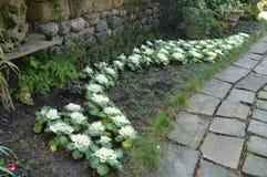 5 Längs gränden växer vita blommor Royaltyfria Foton
