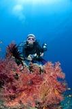 längs havet för rev för kameradykare det röda Royaltyfri Bild