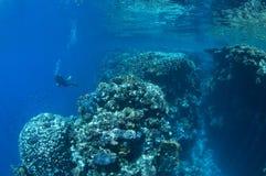 längs havet södra sinai för dykareegypt det röda rev Arkivbilder