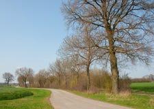 längs laneradtree Royaltyfri Bild