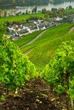 längs mosel vingårdar royaltyfri bild