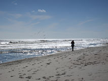 längs strandflorida att gå Fotografering för Bildbyråer