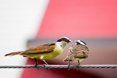 Lära med djur som delar mat Royaltyfri Fotografi