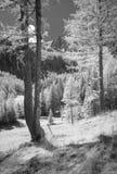 Lärche TreesHunting-Häuschen Lizenzfreie Stockfotos