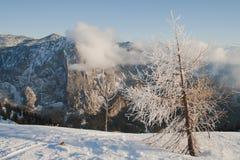 Lärchenbaum und Trisselwand-Berg Stockfotos