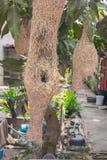 Lärkan bygga bo, weaverbirdredet som göras av hö Royaltyfri Bild