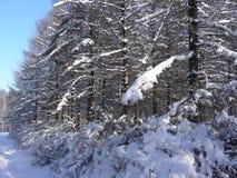 Lärkdungen täckas med snö Arkivbilder