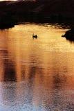 Läs färja, Coloradofloden, AZ arkivfoto