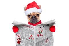 Läs- tidning för hund Arkivbilder