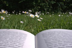 Läsa i gräset royaltyfria bilder