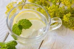 Läsk med citronen Arkivbilder