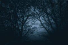 Läskig dyster skog på natten arkivbilder