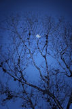 läskig ensam natt Fotografering för Bildbyråer