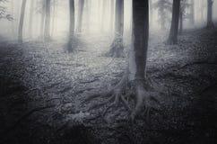 Läskig fasaskog med dimma och mist Arkivfoto