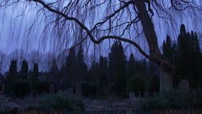 Läskig kyrkogård på skymning - 4k lager videofilmer