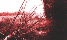 Läskig mörk bakgrund, läskig skog i rött blod, mardröm arkivbilder
