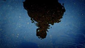 Läskig reflexion av en Person In Water arkivfilmer
