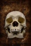 läskig skalle Arkivfoton