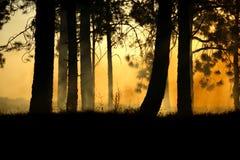 läskig skog Arkivbild