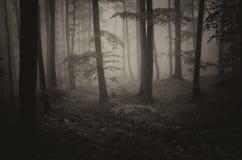 läskig skog Fotografering för Bildbyråer