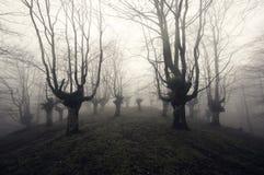 läskig skog royaltyfria foton
