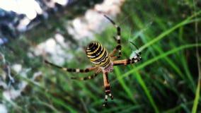 Läskig spindel Arkivbilder