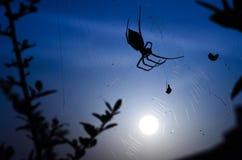 Läskig spindel under månsken Arkivfoto