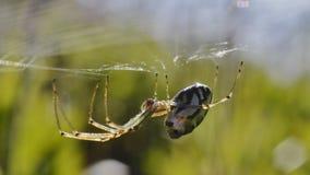 Läskig spindelmakro arkivfoton
