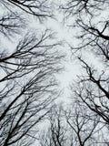 Läskig trädblast i vinterskog Arkivfoton