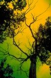 läskig tree Fotografering för Bildbyråer