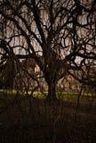Läskig tree mot huset som är upplyst vid ett mystiskt ljust. Royaltyfria Bilder