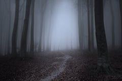 Läskiga Misty Road i skogen Arkivbild