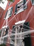 Läskiga spindlar i Georgetown Royaltyfri Bild