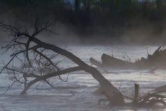 Läskiga träd på en dimmig flod royaltyfri fotografi