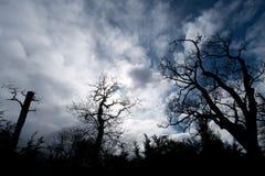 läskiga trees Royaltyfri Bild