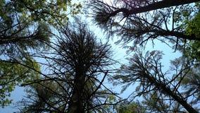 läskiga trees Arkivfoton