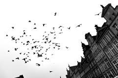 Läskigt en flock av fåglar ovanför byggnaderna arkivbild