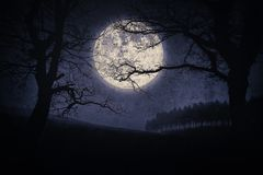 Läskigt halloween landskap på natten med träd och fullmånen royaltyfri fotografi