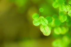 Lässt ein recht kleines, Baumblätter beschmutzte die kleine Runde Lizenzfreie Stockfotografie
