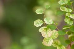Lässt ein recht kleines, Baumblätter beschmutzte die kleine Runde Stockfotografie