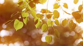 Lässt Topf im Wind Der Herbst stock video