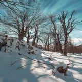 lätt redigera bilden till treesvektorvintern Royaltyfri Foto