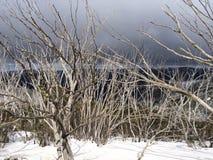 lätt redigera bilden till treesvektorvintern Royaltyfria Foton