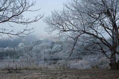 lätt redigera bilden till treesvektorvintern Fotografering för Bildbyråer