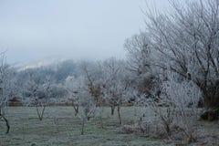 lätt redigera bilden till treesvektorvintern Arkivfoton