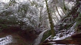 lätt redigera bilden till treesvektorvintern finland Arkivfoto