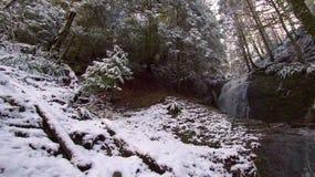 lätt redigera bilden till treesvektorvintern finland Royaltyfri Fotografi
