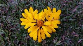 lätt redigera blommahjärta till Royaltyfria Foton