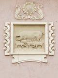 Lättnad med svin Arkivbilder