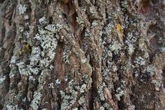 Lättnadstexturskäll av trädet royaltyfria bilder